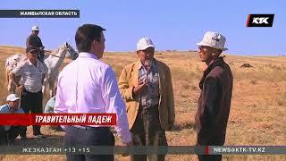 Жамбылские фермеры говорят, что их скот массово гибнет из-за воды с цианидом