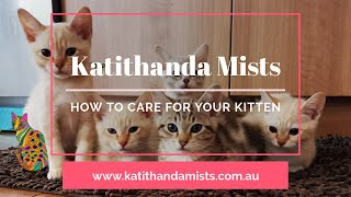 WHAT YOU NEED FOR YOUR KITTEN! V2.0!!  How to care for your kitten @ Katithanda Australian Mists