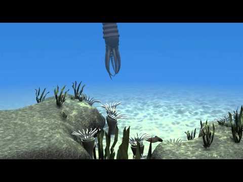 Ordovician marine life