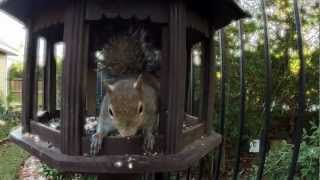 "Squirrels To Birds: ""get Your Own Feeder"""