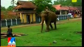 elephant attack.flv