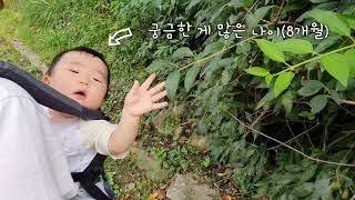 8개월아기 산책하기(feat.에르고베이비아기띠)