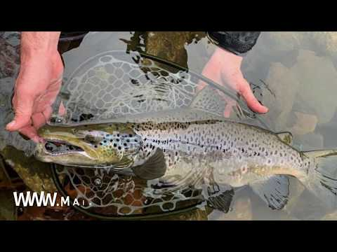 Fly Fishing In Maine, Brook Trout, Rainbow Trout, Brown Trout. With Maine Fishing Guide