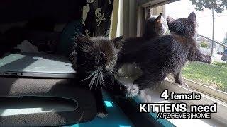 4 Female Kittens Need Forever Homes