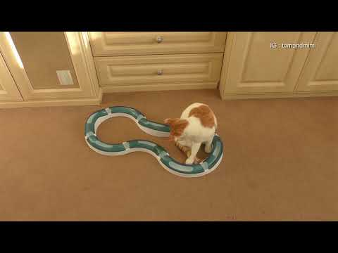 Cat Playing With Catit Design Senses Super Roller Circuit : 4K Ultra Hd