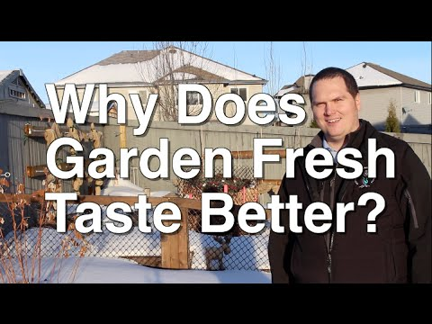 Why do Garden Fresh Fruits and Vegetables Taste Better than Store Bought?