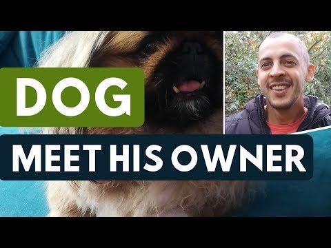 Dog Meet Owner After Holydays