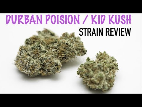 Strain Reviews: Kid Kush & Durban Poison