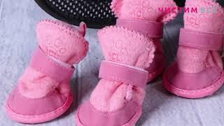 Обувь для животных — работы компании Чистим Всё