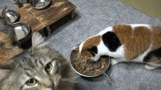 猫たちみんなで食事をしてのんびり