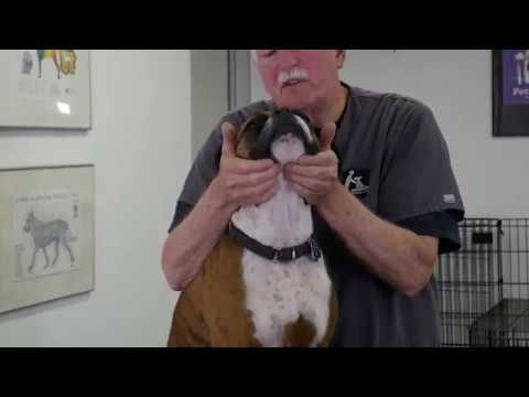 Massage for Dogs who get spring and summer allergies.