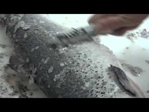 Bear Paw Scaler Video 2016