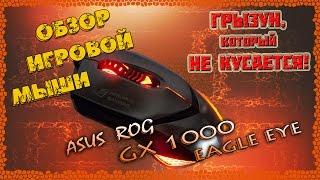 Обзор игровой мыши GX 1000 EAGLE EYE Asus ROG