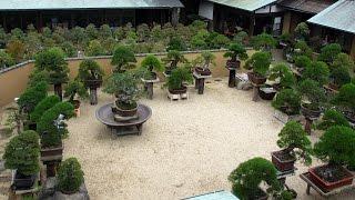 Shunka-en Bonsai, by Kunio Kobayashi
