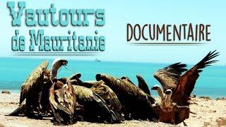 Mauritanie: Les Vautours de Nouadhibou - Documentaire
