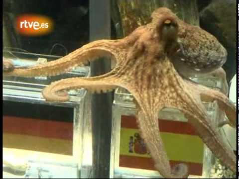 PAUL Octopus Predict Germany vs Spain - He picks SPAIN