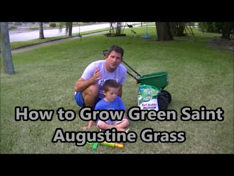 How to Grow a Super Green and Healthy Lawn in Florida!!
