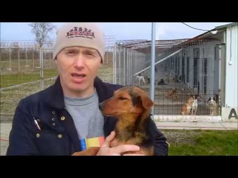 Norton Animal Rescue with the K-9 Angels in Romania.