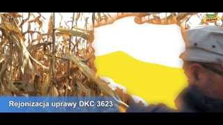 Video Kukurydza DKC 3623_żniwa DEKALB 2013 download MP3, 3GP, MP4, WEBM, AVI, FLV November 2017