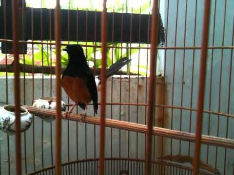 Chimcanhsaigon.com - chich choe lua phuc t9 2012