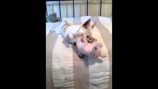 Сопа- собачка девочка с уклоном лесбиянки..=)