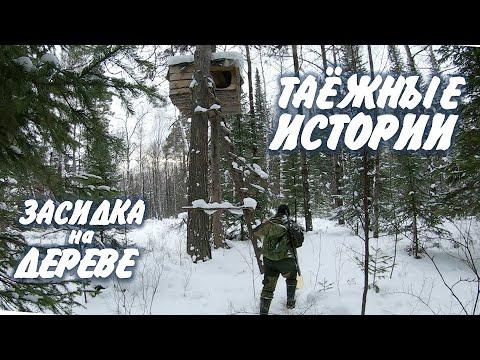 Лучшая засидка на дереве. Таёжные партизаны молчат.  Охота в тайге зимой.
