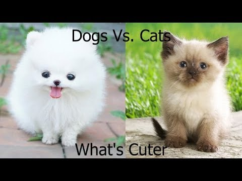 Dogs Vs. Cats (What's Cuter) Ep. 1