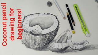 Coconut Pencil Drawing Simple Steps