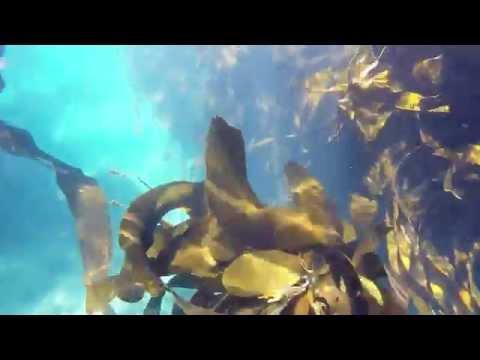 GoPro: Diving Sandy Cove Atlantic Coastline Cape Town