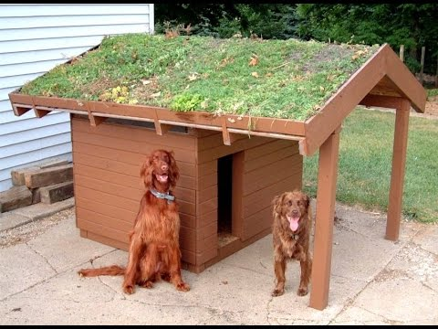 Where can you find outdoor dog kennel designs?