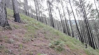 Mount Pulag via Akiki Trail: Burnt Montane Forest