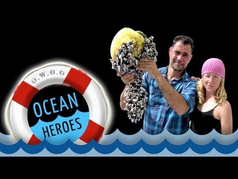 Ocean Heroes: The Plastics Problem -- 5 Gyres Institute