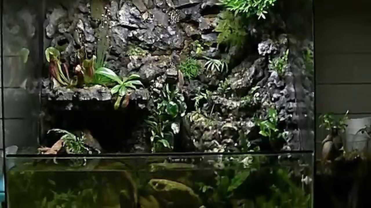 paludarium, riparium, aquarium, vivarium with waterfall and fish, 2013 carnivore plants - YouTube