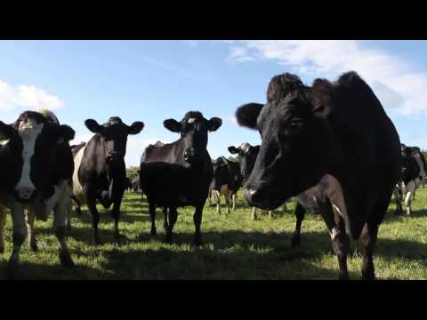Greenfield farm achieving 34.5c/l in September