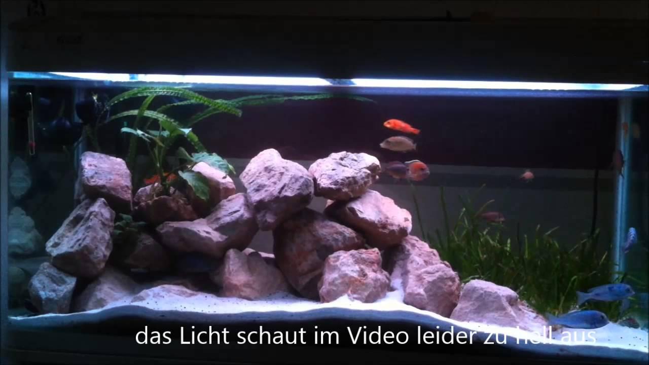 5050 Rgb Lichtsteuerung Fur Aquarium Mit Controller Ms 35 Youtube