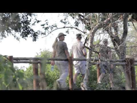 The Mopane Bush Lodge Animal Experiences