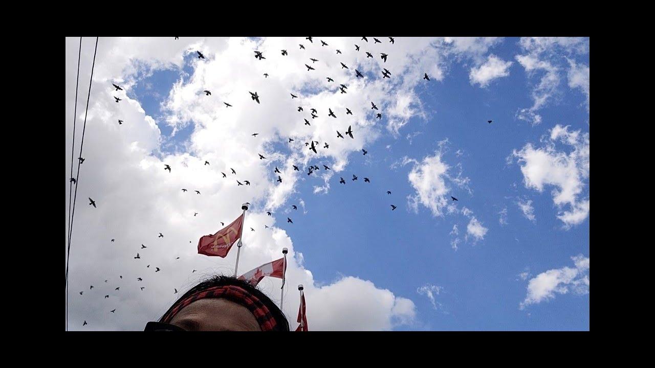 ❤今天開車送粽子,停在麦当劳,突然头頂天上漫天飞滿了鳥! 猜:它們想幹嘛? @06272020