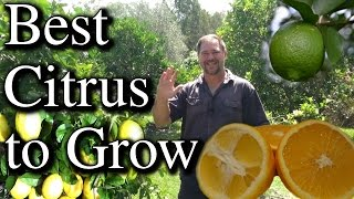 Top Five Citrus Fruit Trees To Grow in Your Backyard