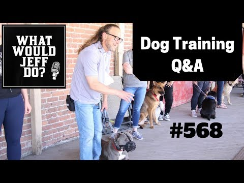 dog-training---stop-dog-barking---puppy-training-tips---what-would-jeff-do?-q&a-ep.568-(2019)