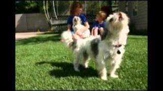 Artificial Grass For Pets - The Pet Friendly Grass For Dogs