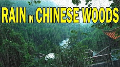 🎧 RAIN IN CHINESE WOODS | Ambient Noise For Relaxation, Sleep, Studying, @Ultizzz day#38