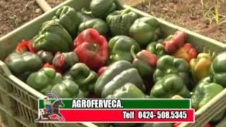 Perfil Agropecuario Domingo 28 Mayo  (Control Biológico en siembra de pimentón y papa)
