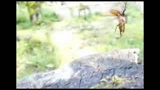 昆虫大冒険 ウスバカミキリ  鮭川村