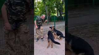 САМЫЕ УМНЫЕ собаки - Немецкие овчарки! 🐕🐕