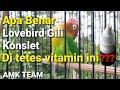Lovebird Konslet Gili Ovi Kurniawan Amk Team  Mp3 - Mp4 Download