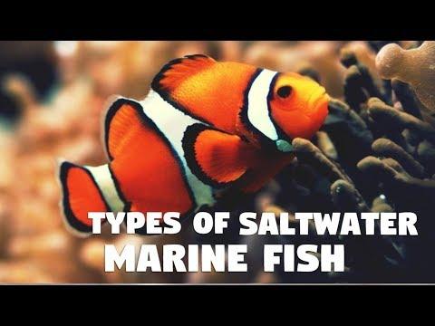 Types Of Saltwater Aquarium Fish