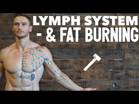 What is the Lymphatic System: Boost Immune System & Increase Fat Loss