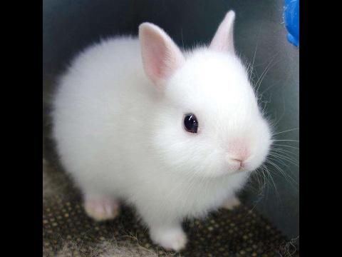 Cute Rabbits Funny Baby Bunny Rabbi...