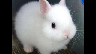Funny Baby Bunny Rabbit Videos Compilation - Cute Rabbits thumbnail