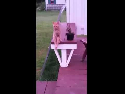 кот сел на лавочку
